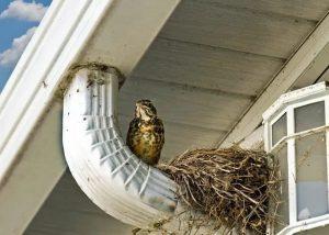 Bird Nest Clogging Gutter System